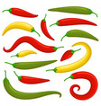 closeup chilly pepper set vector image