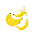 set of bunches of fresh banana vector image