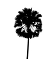 with single palm tree isolated on white background vector image vector image