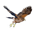 an image of a flying hawk vector image vector image