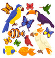 exotic birds tropical fishes and butterfly vector image