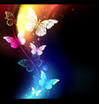 fabulous night butterflies vector image