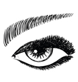 female eye vector image vector image