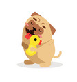 funny cartoon pug dog character hugging yellow vector image vector image