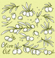 set isolated graphic olives vector image