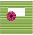 gerbera on the green yellow background vector image