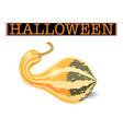 halloween pumpkin elongated striped gourd vector image