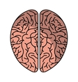 human brain organ isolated icon vector image vector image