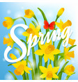 spring post card with narcissus vector image vector image