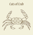 Cuts of crab vector image vector image