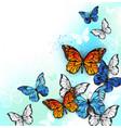 flock multicolor butterflies vector image vector image