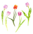 red and pink tulips vector image