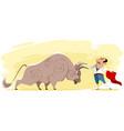toreador and bull vector image