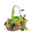 wicker basket with grapes vector image vector image
