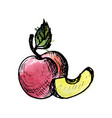 ink drawing peach vector image vector image