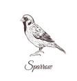 sparrow sketch vector image vector image