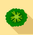 top view broccoli icon flat style vector image