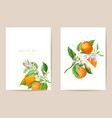 wedding mandarin invitation card vintage save vector image vector image