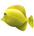 A yellow fish vector image vector image