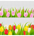 tulip border with transparent background vector image vector image