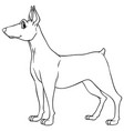 animal outline for dog vector image vector image