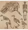 Bones Skulls Skeletons - freehands vector image vector image