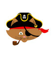 cat pirate home pet buccaneer filibuster hat and vector image