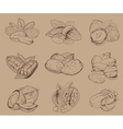 Engraved nuts isolated Set of mixed nuts vector image vector image
