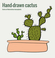 homemade cactus in a pot hand-drawn vector image