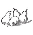 four pears vintage vector image
