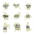 olive oil tree and bottle or jar sketch icons vector image