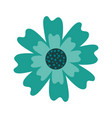 aster flower natural petal decoration image vector image