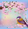 bird blossom cherry flowers background vector image