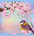 bird blossom cherry flowers background vector image