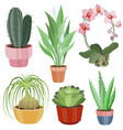 collection with flat flowers in pots vector image