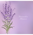beautiful lavender flowers on violet background vector image vector image