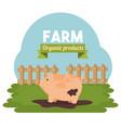 farm animal icon vector image vector image