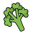 broccoli fresh vegetable icon vector image vector image