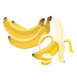 cartoon banana fresh vitamin fruit juicy sliced vector image