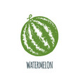 hand drawn watermelon on white background vector image vector image