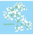 Branch of beautiful hand-drawn gypsophila vector image vector image