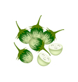 Fresh Green Eggplant on A White Background vector image vector image