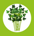 leafs corainder healthy food vector image