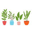 potted evergreen house plants eco style vector image