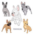 purebred canine hand drawn vector image vector image