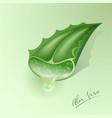 aloe vera green plant cut leaf juice drop
