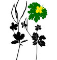the plant is celandine monochrome vector image