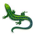 Green lizard vector image vector image