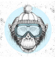 hipster animal monkey in winter hat vector image