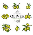 set hand drawn olives vector image vector image